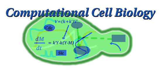Computational Cell Biology Figure