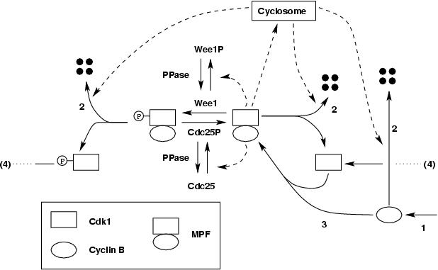 network Feedback Loop Wiring Diagram on